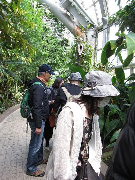 温室の中で植物を観察