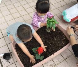 プランターの土を掘って花の苗を植えたよ!
