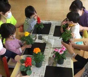 サルビアや日々草の苗を観察する子どもたち